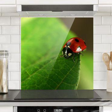Spritzschutz Glas - Lady Bird - Quadrat 1:1