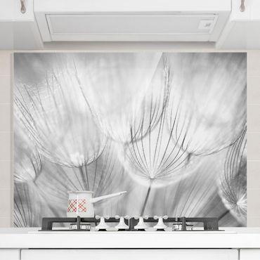 Spritzschutz Glas - Pusteblumen Makroaufnahme in schwarz weiß - Quer 2:1