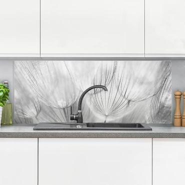 Spritzschutz Glas - Pusteblumen Makroaufnahme in schwarz weiß - Panorama Quer