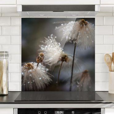Spritzschutz Glas - Pusteblumen mit Schneeflocken - Quadrat 1:1