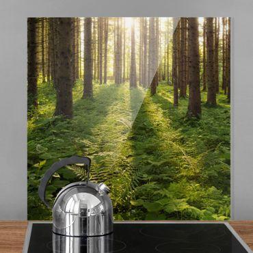 Spritzschutz Glas - Sonnenstrahlen in grünem Wald - Quadrat 1:1