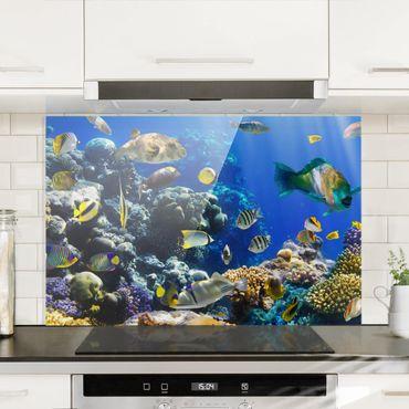 Spritzschutz Glas - Underwater Reef - Quer 3:2