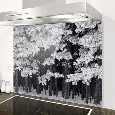 Spritzschutz Glas - Wald mit Raureif in Österreich - Quer 3:2