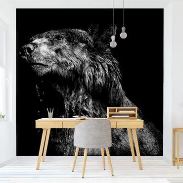 Fototapete - Bär vor Schwarz
