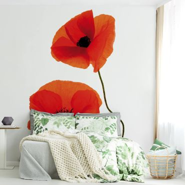 Fototapete Charming Poppies