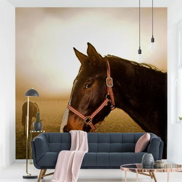 Fototapete Early Horse