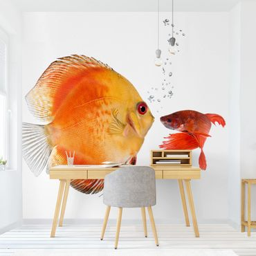 Fototapete Küssende Fische