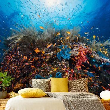 Fototapete Lagune Unterwasser
