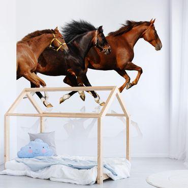 Fototapete Pferdeherde