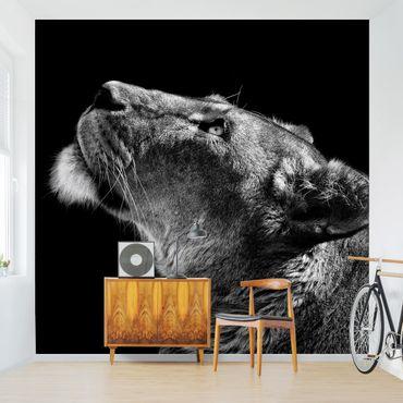 Fototapete - Portrait einer Löwin
