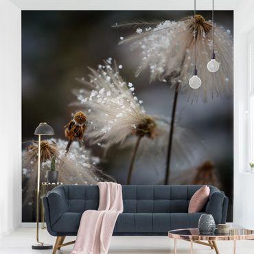 Fototapete - Pusteblumen mit Schneeflocken