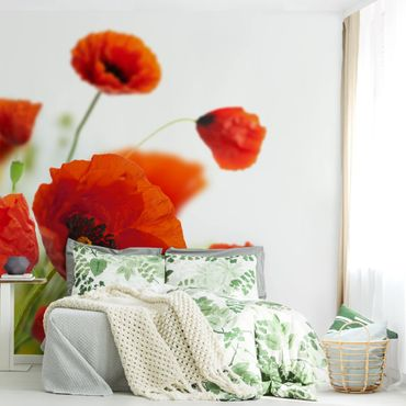 Fototapete Radiant Poppies