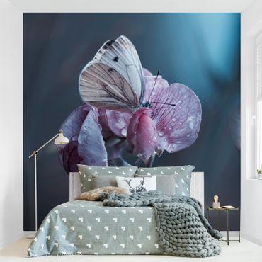 Fototapete Schmetterling im Regen