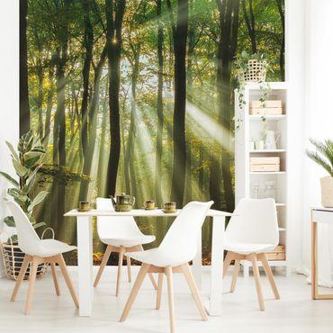 Fototapete Sonnentag im Wald