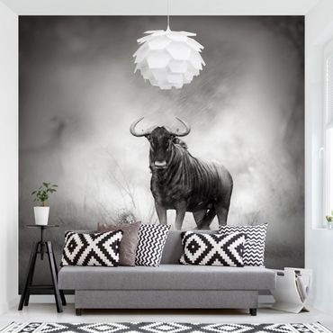Fototapete Staring Wildebeest