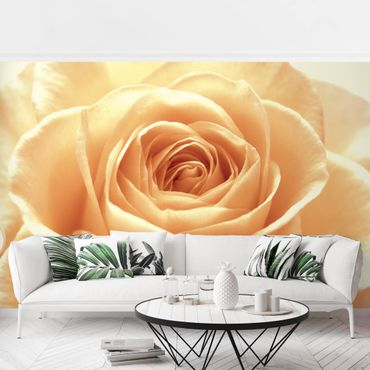 Fototapete Sweet Orange Rose