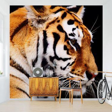 Fototapete Tiger Schönheit