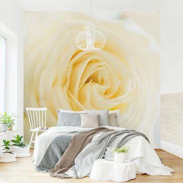 Fototapete White Rose