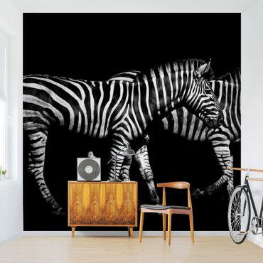 Fototapete - Zebra vor Schwarz