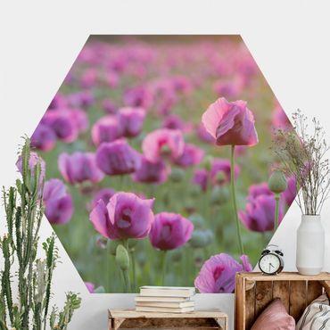 Hexagon Mustertapete selbstklebend - Violette Schlafmohn Blumenwiese im Frühling