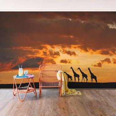 Fototapete Fünf Giraffen