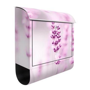 Briefkasten - Zartvioletter Lavendel