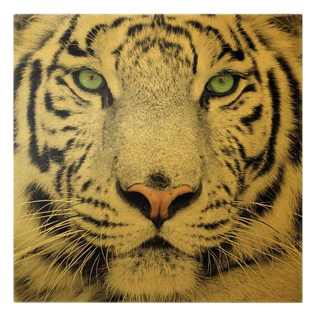 Leinwandbild Gold - Weißer Tiger - Quadrat 1:1