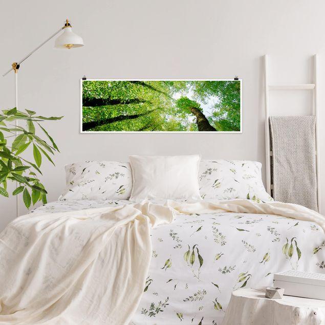 Poster - Bäume des Lebens - Panorama Querformat