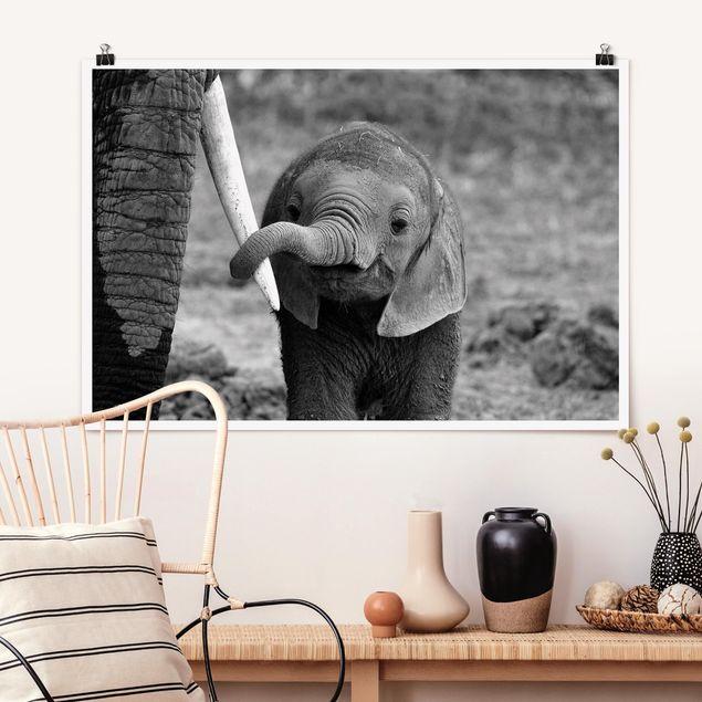 Poster - Elefantenbaby - Querformat 2:3