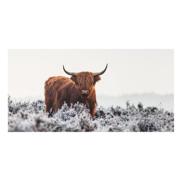 Forex Fine Art Print - Bison in den Highlands - Querformat 1:2