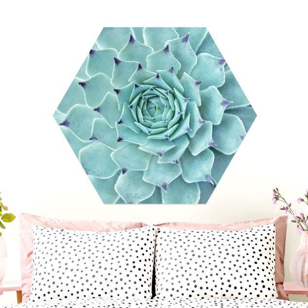 Hexagon Bild Alu-Dibond - Kaktus Agave