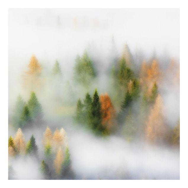 Forex Fine Art Print - Nebelwald im Herbst - Quadrat 1:1