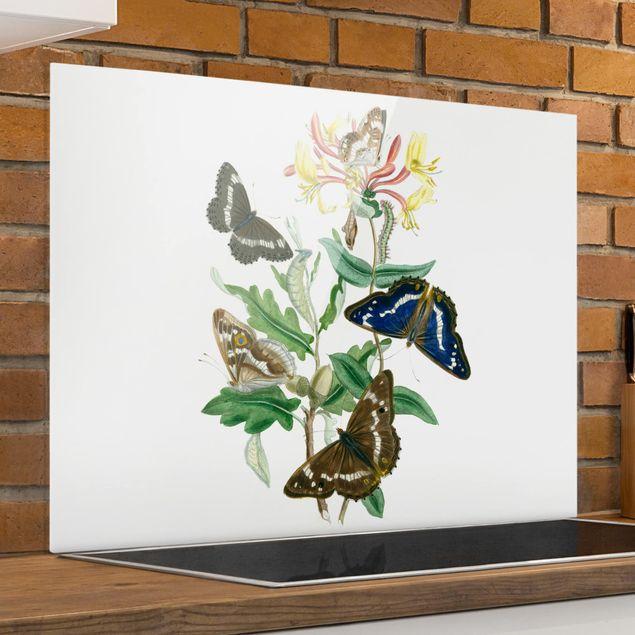Glas Spritzschutz - Britische Schmetterlinge IV - Querformat - 4:3