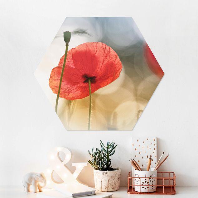 Hexagon Bild Forex - Mohnblumen am Morgen