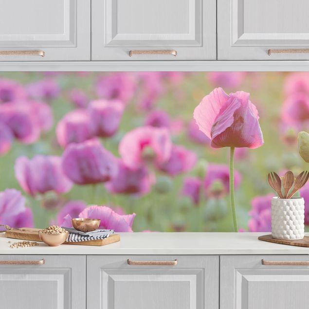 Küchenrückwand - Violette Schlafmohn Blumenwiese im Frühling