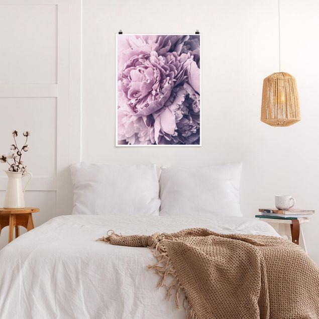 Poster - Lila Pfingstrosenblüten - Hochformat 4:3