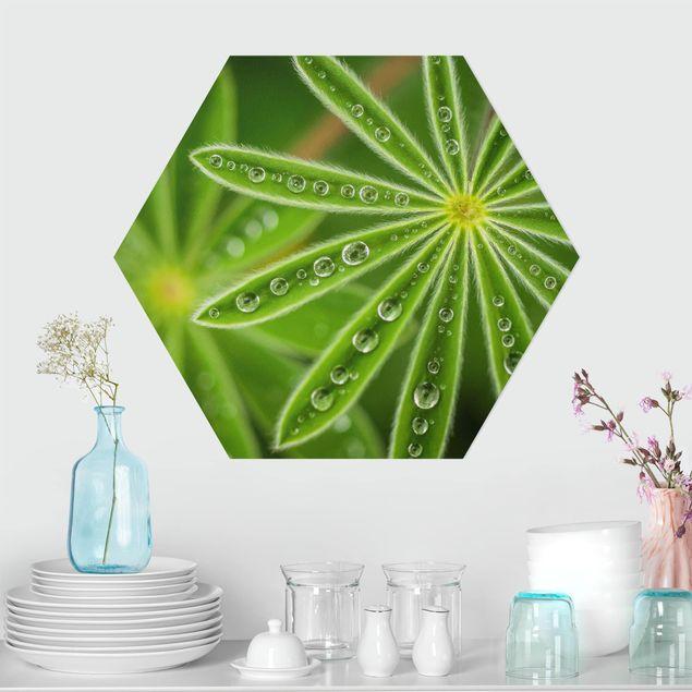 Hexagon Bild Alu-Dibond - Morgentau auf Lupinenblättern