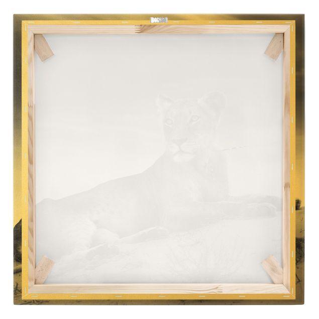 Leinwandbild Gold - Resting Lion - Quadrat 1:1