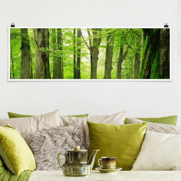 Poster - Mighty Beech Trees - Panorama Querformat