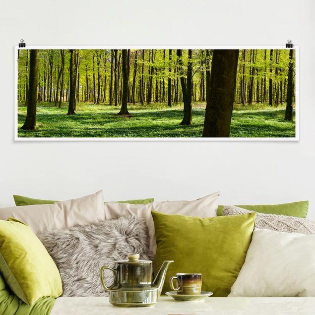 Poster - Waldwiese - Panorama Querformat