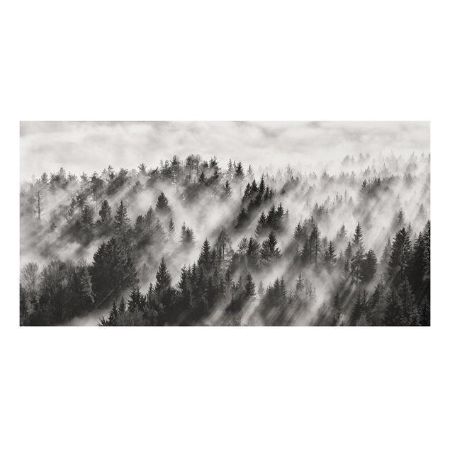 Forex Fine Art Print - Lichtstrahlen im Nadelwald - Querformat 1:2