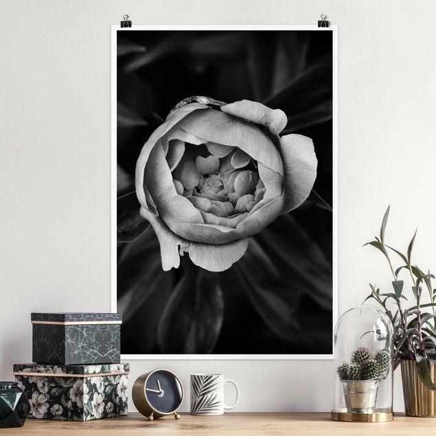 Poster - Pfingstrosenblüte vor Blättern Schwarz Weiß - Hochformat 3:2