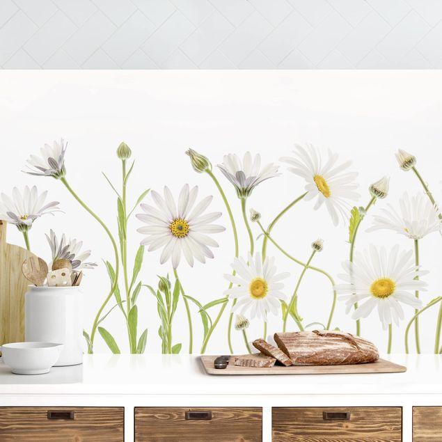 Küchenrückwand - Leichter Gänseblümchen Mix I