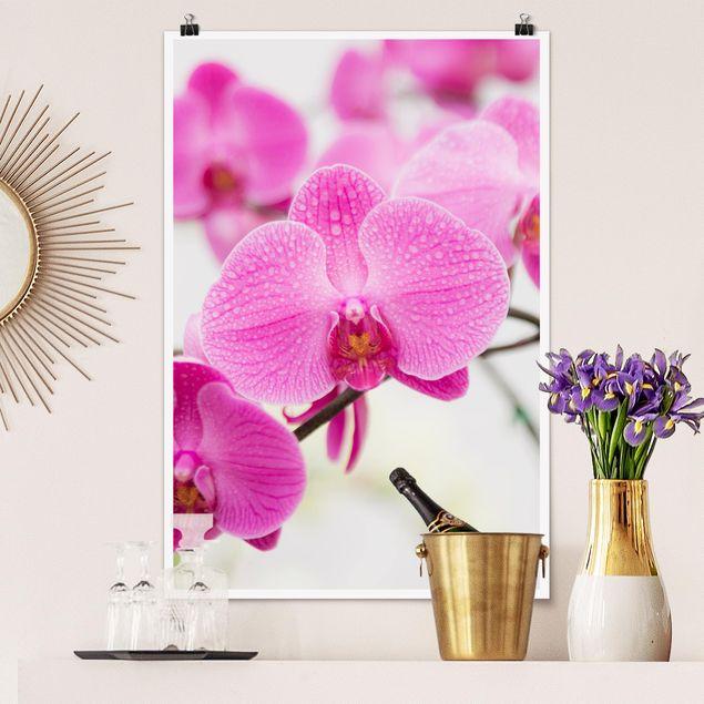 Poster - Nahaufnahme Orchidee - Hochformat 3:2