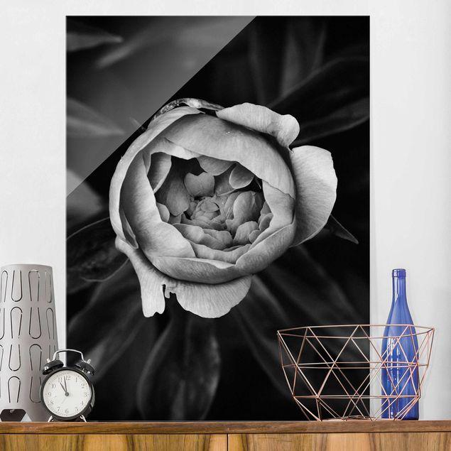 Glasbild - Pfingstrosenblüte vor Blättern Schwarz Weiß - Hochformat 4:3