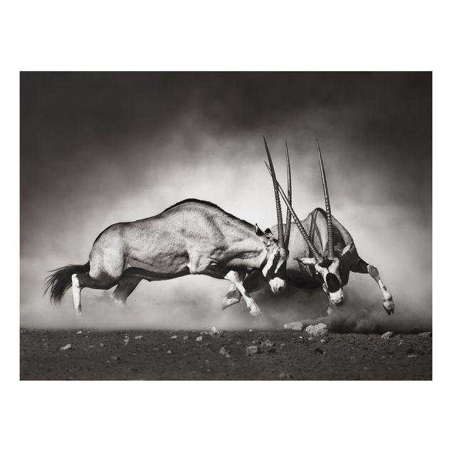 Alu-Dibond Bild - Wilder Kampf