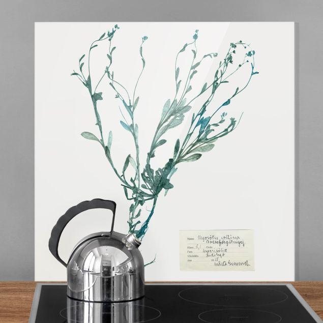Glas Spritzschutz - Gepresste Blumen - Vergissmeinnicht - Quadrat - 1:1