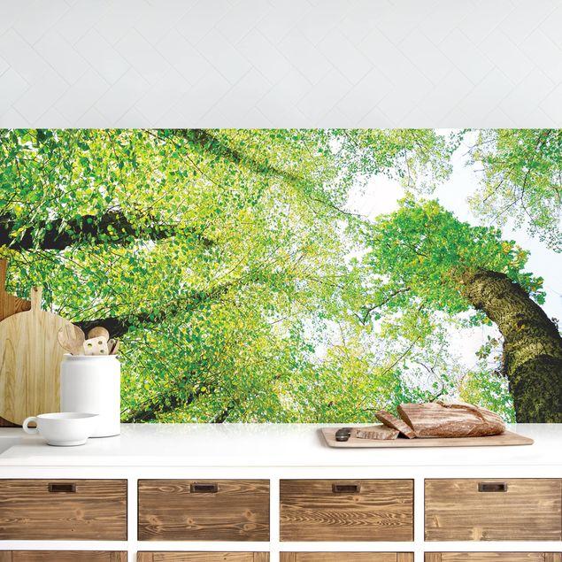 Küchenrückwand - Bäume des Lebens