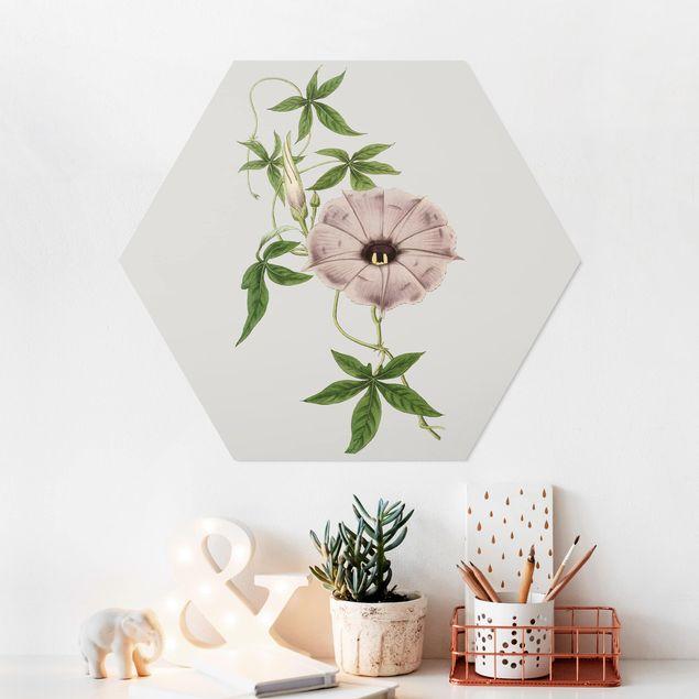 Hexagon Bild Forex - Florale Schmuckstücke IV