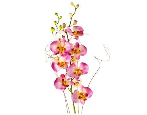 Wandtattoo Orchidee No.184 Orchidee Strauß